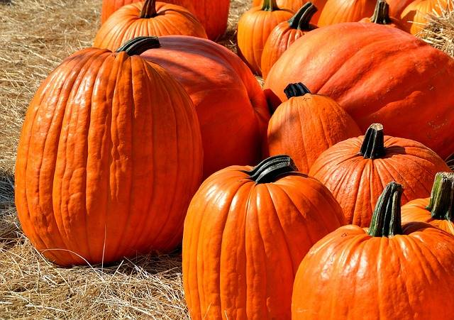 Free photo: Pumpkins, Halloween, Autumn - Free Image on Pixabay - 1572864 (82068)
