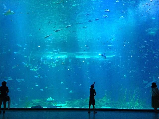 Free photo: Sea, Children, Fish, Aquarium - Free Image on Pixabay - 875663 (89931)