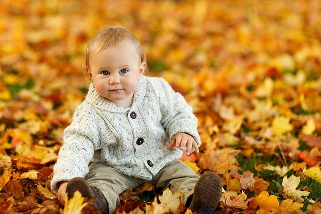 Free photo: Autumn, Fall, Baby Boy, Child, Cute - Free Image on Pixabay - 275920 (96294)
