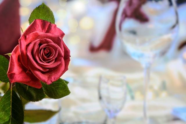Free photo: Dinner, Red Rose, Love - Free Image on Pixabay - 2021656 (107669)