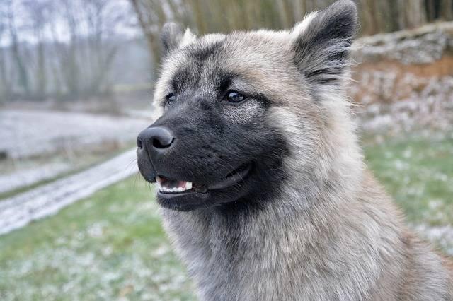 Free photo: Dog, Bitch, Young Bitch Nova - Free Image on Pixabay - 3191316 (111438)