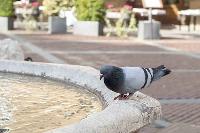Free photo: Dove, Fountain, Square, Italy - Free Image on Pixabay - 3220556 (112806)