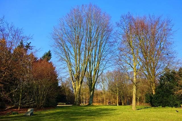 Free photo: Park, Landscape, Lawn, Grass, Tree - Free Image on Pixabay - 3221399 (113091)
