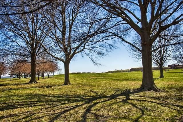 Tree Landscape Nature · Free photo on Pixabay (114293)