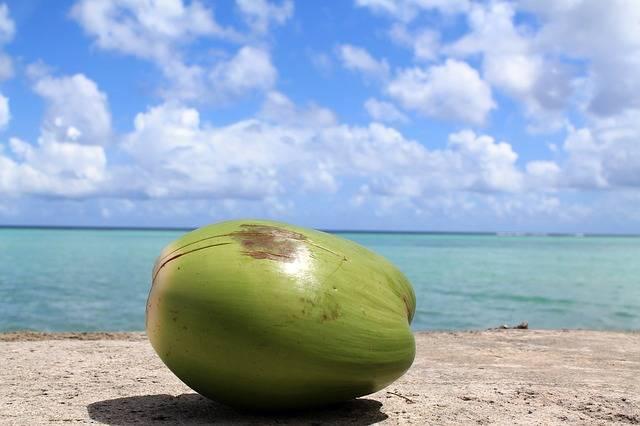Coconut Guam Sky · Free photo on Pixabay (115494)