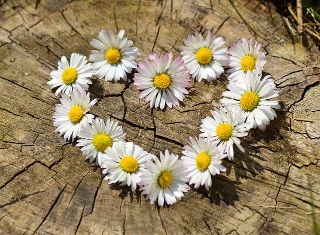 Daisy Heart Flowers Flower · Free photo on Pixabay (142076)