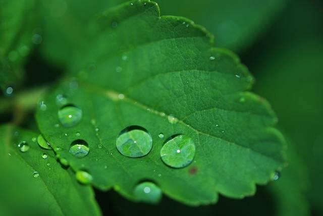 Leaf Droplet Water - Free photo on Pixabay (144127)