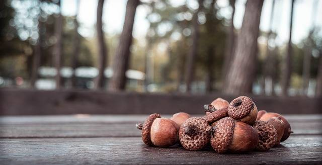 Acorn Acorns Autumn - Free photo on Pixabay (154378)