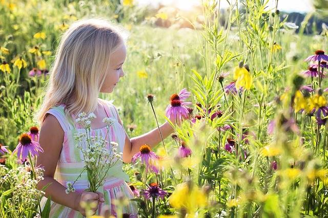 Little Girl Wildflowers Meadow - Free photo on Pixabay (157474)