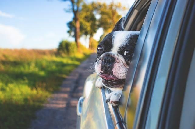 Adorable Animal Canine - Free photo on Pixabay (160270)