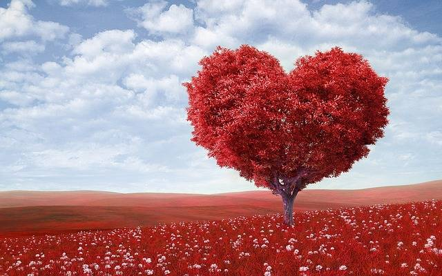 Heart-Shape Tree Red - Free photo on Pixabay (160788)