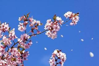 薬以外で効果を感じた花粉症対策ランキング