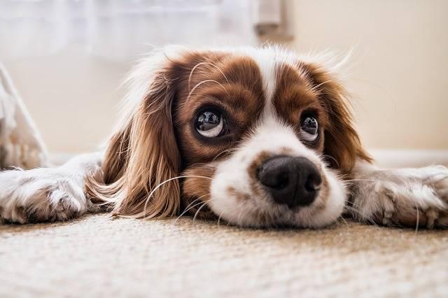 Dog Sad Waiting - Free photo on Pixabay (4111)