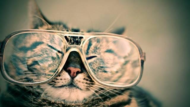 Cat Glasses Eyewear - Free photo on Pixabay (4112)