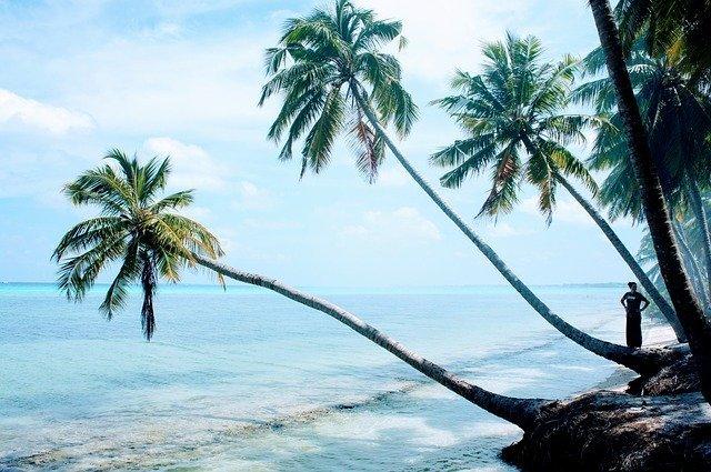 Palm Trees Blue Sky - Free photo on Pixabay (6668)