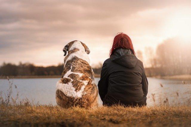 Friends Dog Pet Woman - Free photo on Pixabay (6669)
