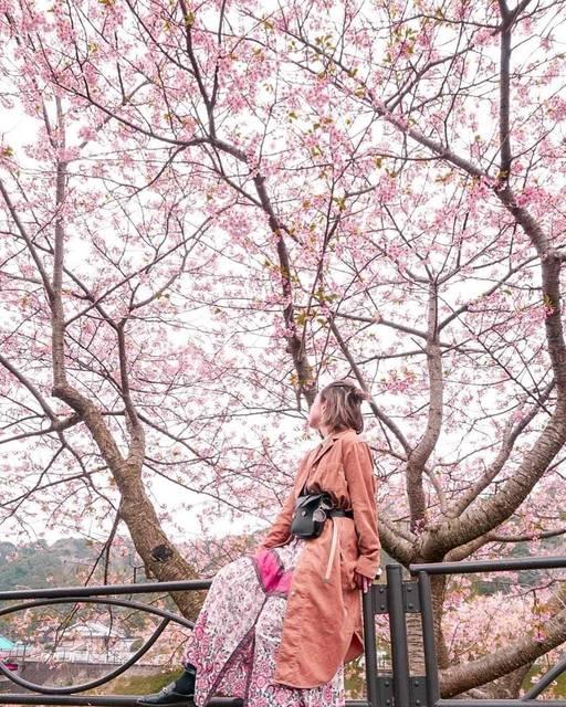 期間限定のピンクスポット!みんな大好き桜の見どころ!
