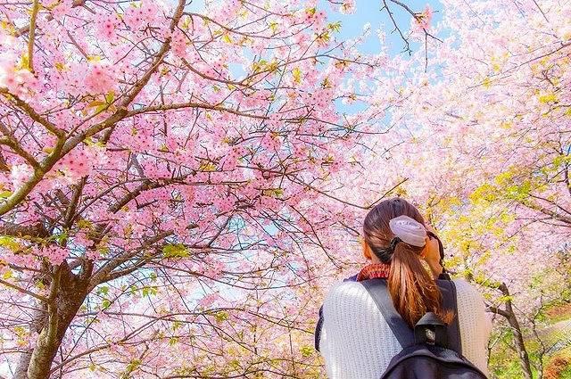ピンクの絶景♡全国最高の花見スポット15選