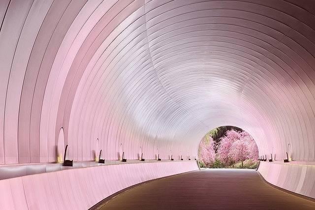 今年行ってみたい注目の「桜絶景スポット」ベスト5