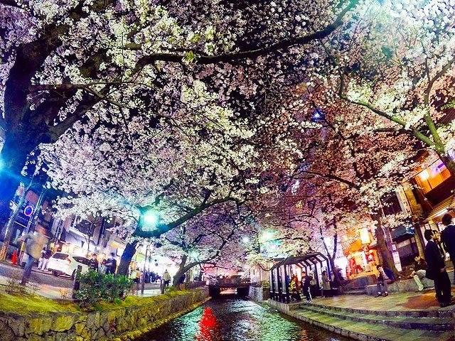 幻想的な美しさ!全国の夜桜ライトアップ7選
