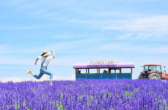 癒される紫の絶景♡北海道のラベンダー畑4選