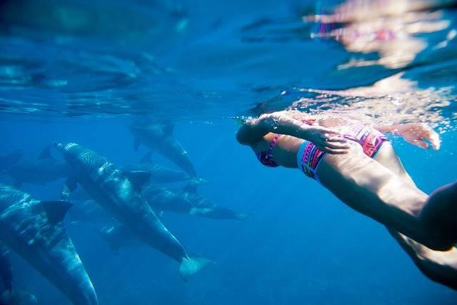 ハワイ「イルカの学校」で叶える、イルカやマンタと一緒に泳ぐ憧れ体験♡