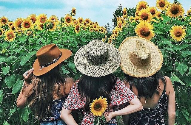夏の「#genic_flower」「#genic_yellow」といえばコレ!西日本のひまわり畑