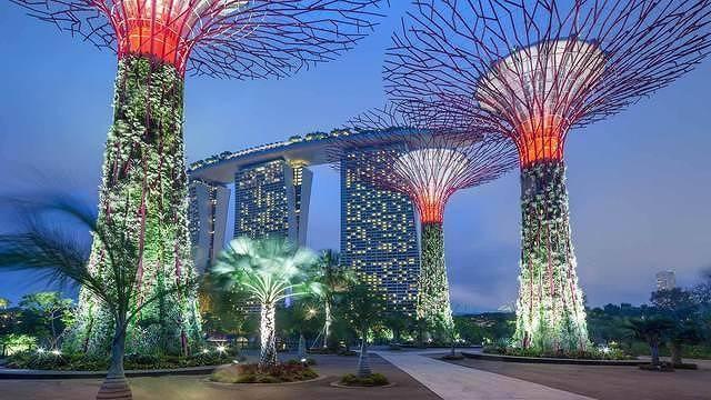 見られるのはこの時期だけ!シンガポールの大人気植物園に日本が誇る二本松の菊「千輪咲」が登場