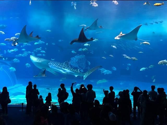旅好きが選ぶ!日本の動物園・水族館ランキング2018!全部知ってる?