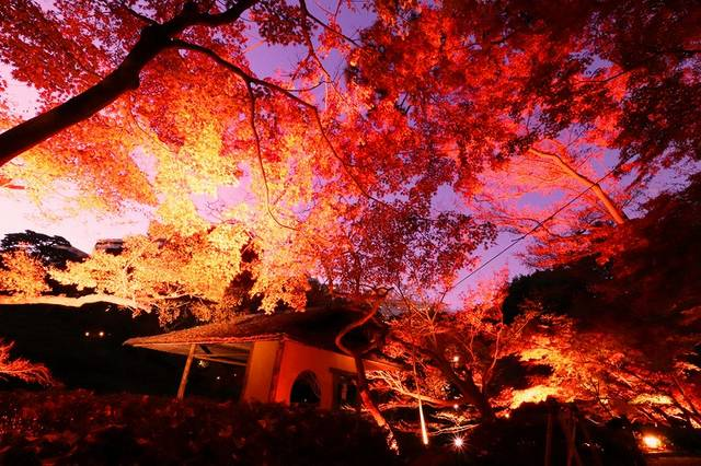 都心に、赤が咲く。伝統的なJapan Redに染まる日本庭園「八芳園」
