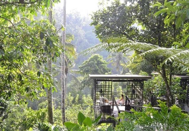 星のやバリに、ジャングルを見下ろしながら楽しむ「空中ガゼボ朝食」登場