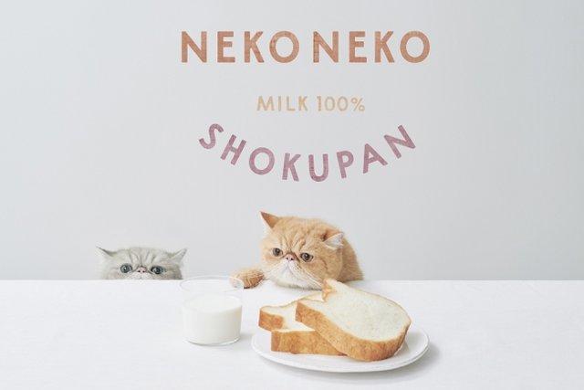 ねこの形の高級食パン専門店「ねこねこ食パン」が東京都内にオープン!