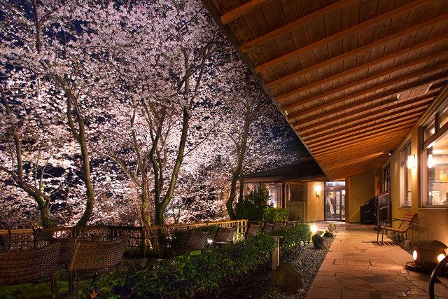 早咲きの河津桜!絶景お花見温泉×桜パンケーキ×テラスで夜桜を満喫♡