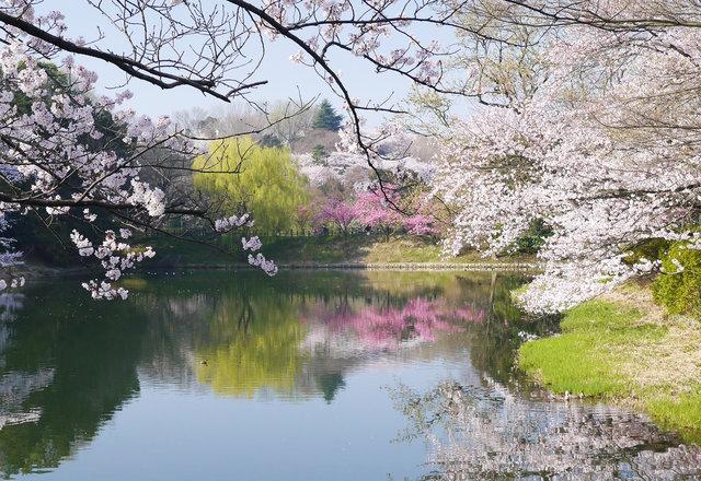 2月中旬から開花見込み!「日本さくら名所100選」にも選ばれる桜の名所をご紹介♡