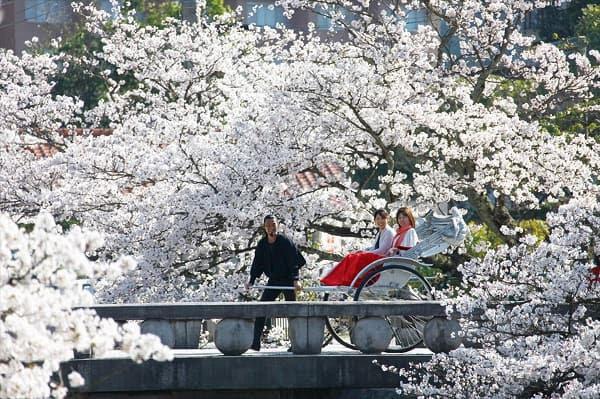 """星野リゾート「界」で、""""日本の春""""を楽しむ「乙な花見旅」♡"""