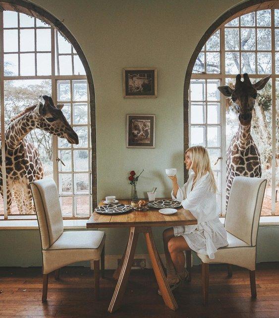 キリンと一緒にステイできる!ケニアで人気の体験型ホテル