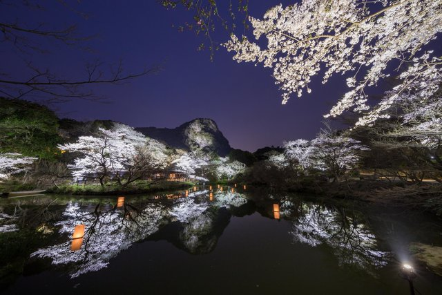 一度は行きたい桜の名所!水面に映る九州最大級のライトアップ♡