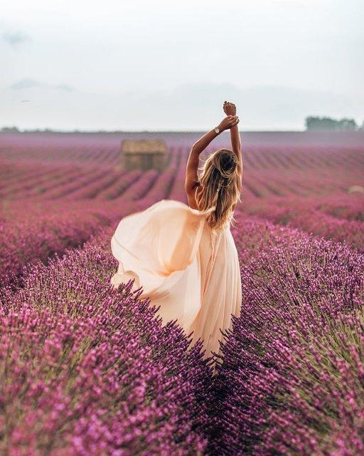 リラックスが降り注ぐプロヴァンスの花畑