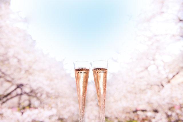 """大阪城で満開の桜を楽しむ新名所♡ミライザ大阪城内で春のお花見""""桜フェア""""開催!"""