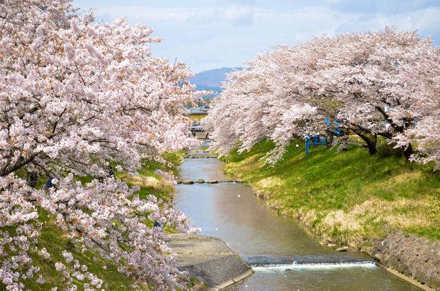 春の限定配信!インドア花見で満開の桜を楽める桜の名所!一緒に楽しみたいお取り寄せスイーツも♡
