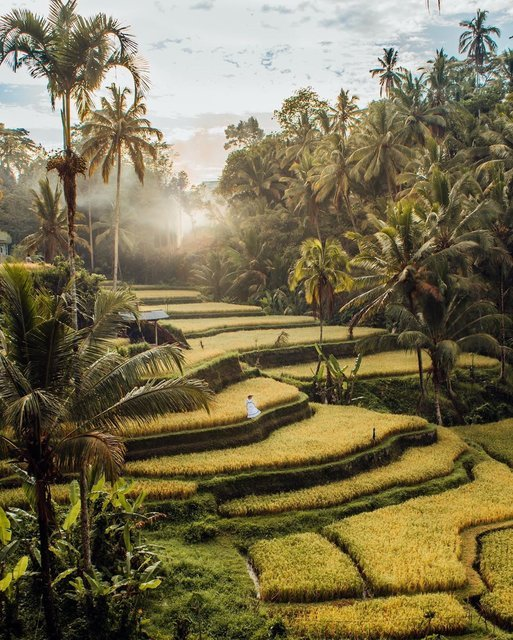 ヤシの木に囲まれたバリ島の幻想的な「ライステラス」