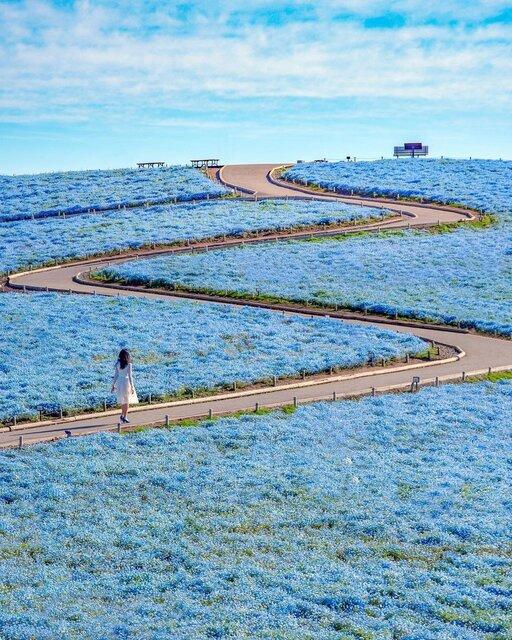国営ひたち海浜公園の「青」と「赤」の絶景