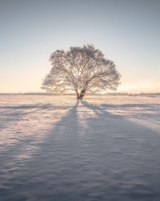 北海道にポツンと佇む人気者「ハルニレの木」