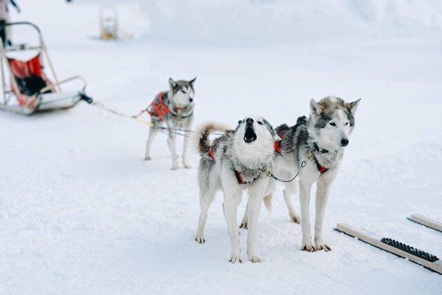写真好きのユートピア・冬の北海道上川町を誰かと一緒に巡るススメ