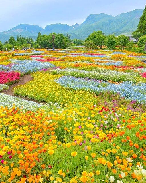 広大な高原とお花畑に恋する女子旅へ!西日本最大級の花畑がある大分「くじゅう花公園」