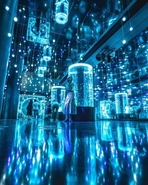 新感覚水族館「マクセル アクアパーク品川」でエキサイティングな体験を