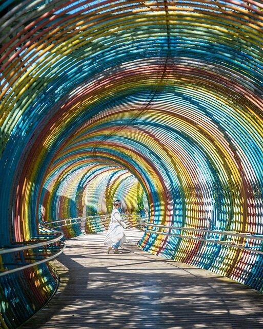 「兵庫県立播磨中央公園」の2大フォトスポット、虹の橋とラクウショウ並木