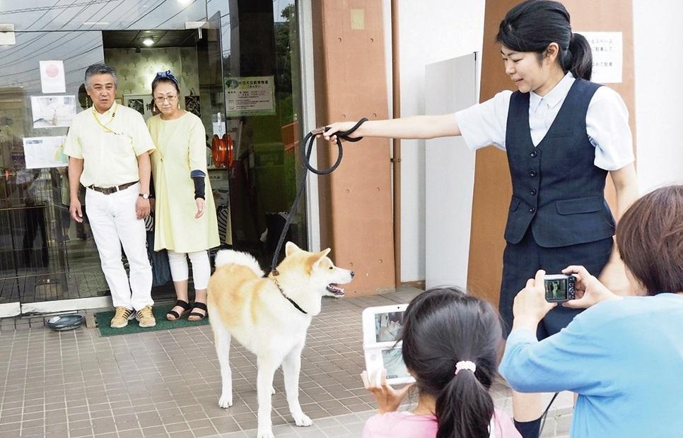 保存会会館を訪れ、秋田犬と戯れる人も多数