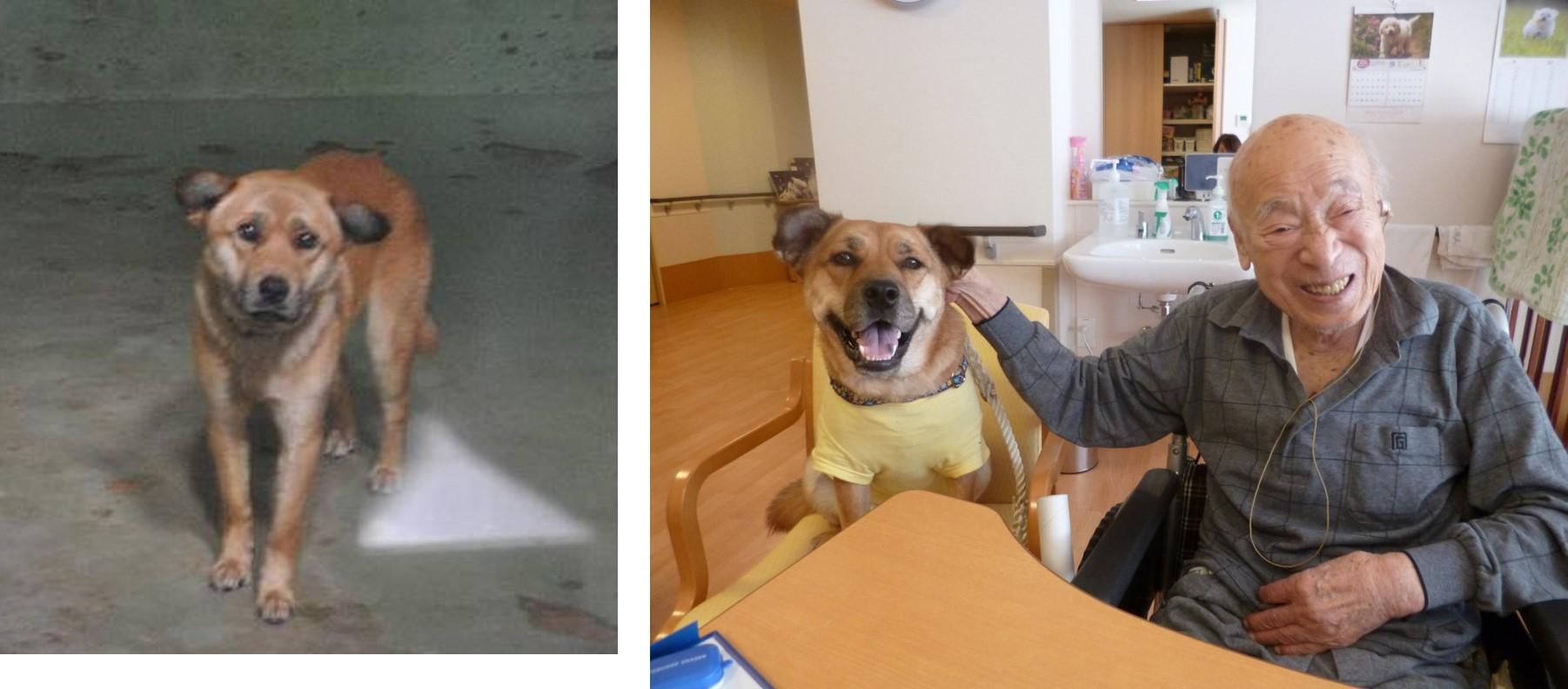 保健所でがりがりだった文福は山科に引き取られた今では幸せそうな表情を浮かべる