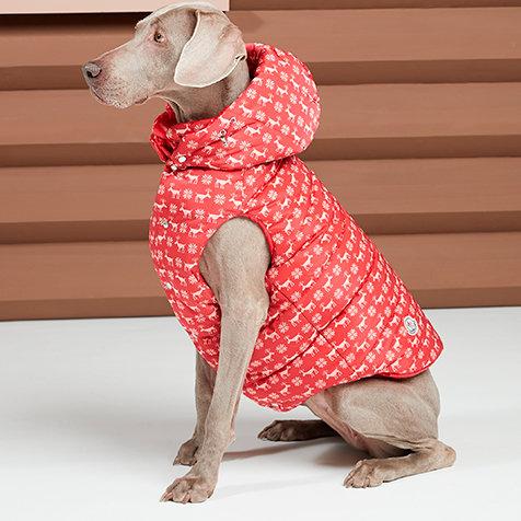 犬たちのプレミアムダウン。「モンクレール ポルド ドッグ クチュール」|MONCLER